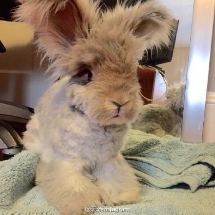 橡皮泥手工制作动物兔子439