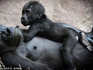 表情猩猩伸手要钱gif搞笑伸手图片