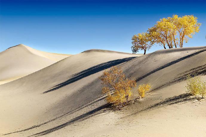沙漠绿洲大自然唯美风景高清摄影图片