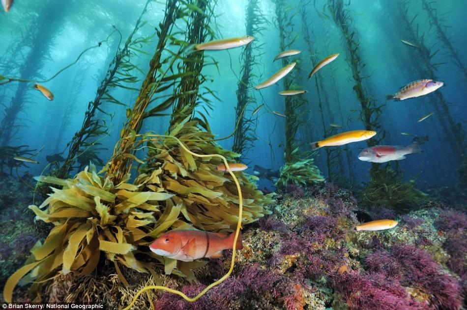 壁纸 海底 海底世界 海洋馆 水族馆 950_632