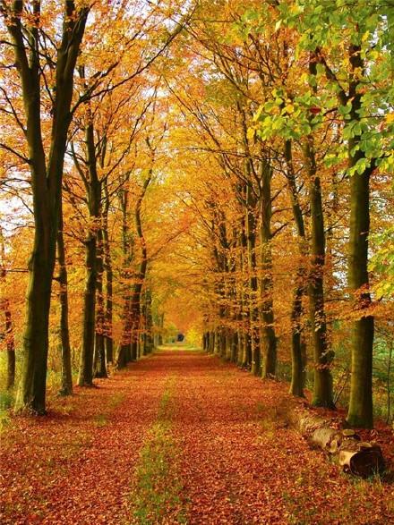清新唯美的自然风景图片