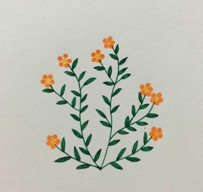 简单的小清新花草简笔画