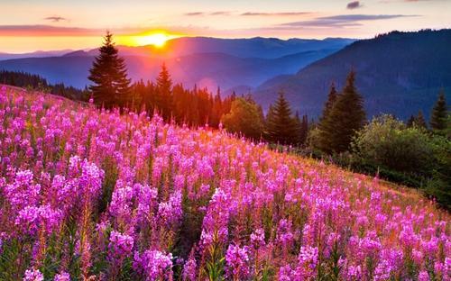 清晨阳光唯美自然风景图片