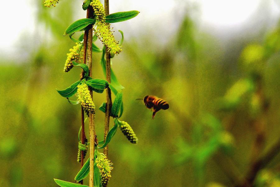 蜜蜂与蚂蚁糖尿病身上像柳絮在爬图片