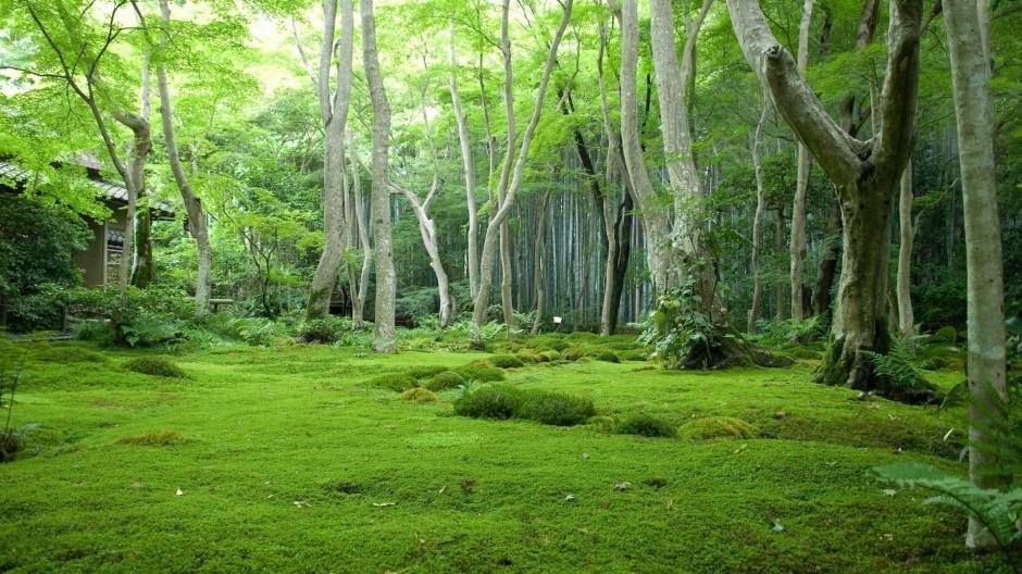 清新护眼大自然绿色美景壁纸