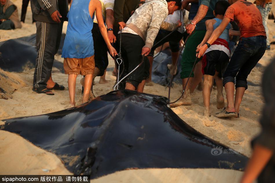 解除巴勒斯坦出海禁令 渔民出动捕捞大批黄貂鱼