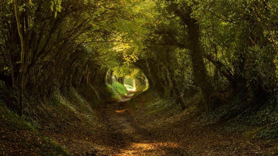 林间小溪水图片 林间小路唯美风景桌面壁纸图片