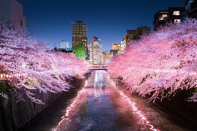 日本旅游樱花风景摄影图片:去看那花花世界