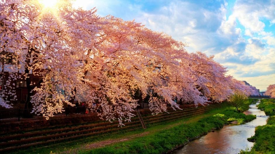 花风景图片大自然风景图片 秋季大自然迷人风景图片