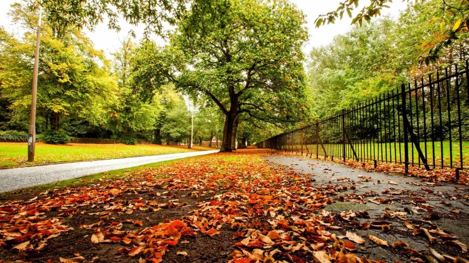 秋天枫叶唯美风景桌面壁纸
