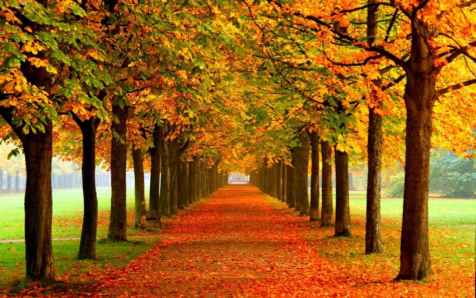秋天的風景畫高清壁紙