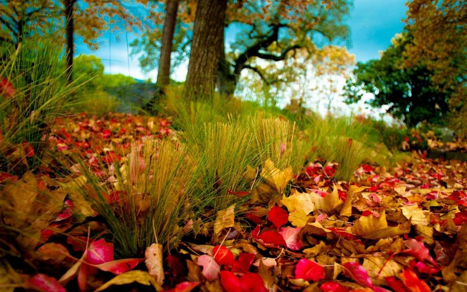 秋天的风景画高清壁纸