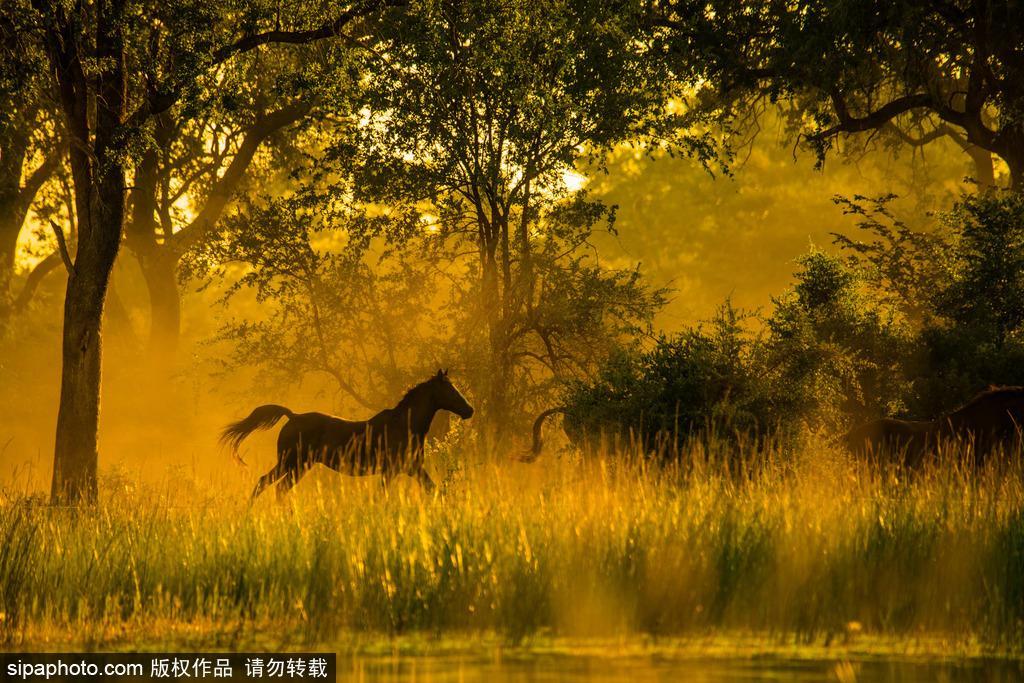 唯美如高清壁纸 摄影师实拍世界各地野生动物
