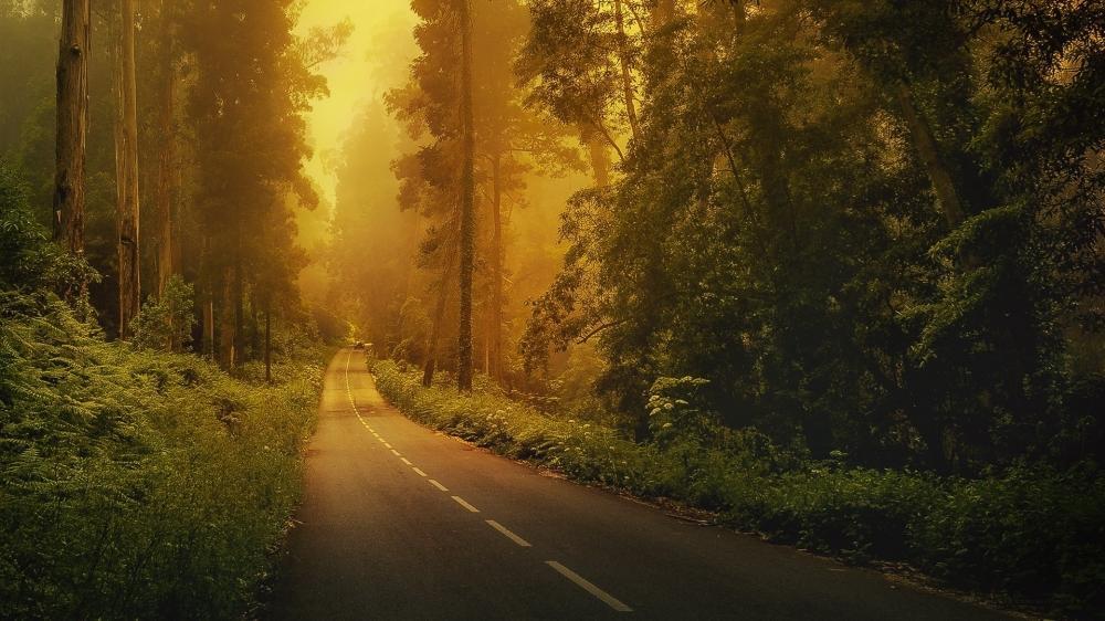 精选金色阳光下的梦幻森林唯美自然风景高清电脑桌面壁纸下载