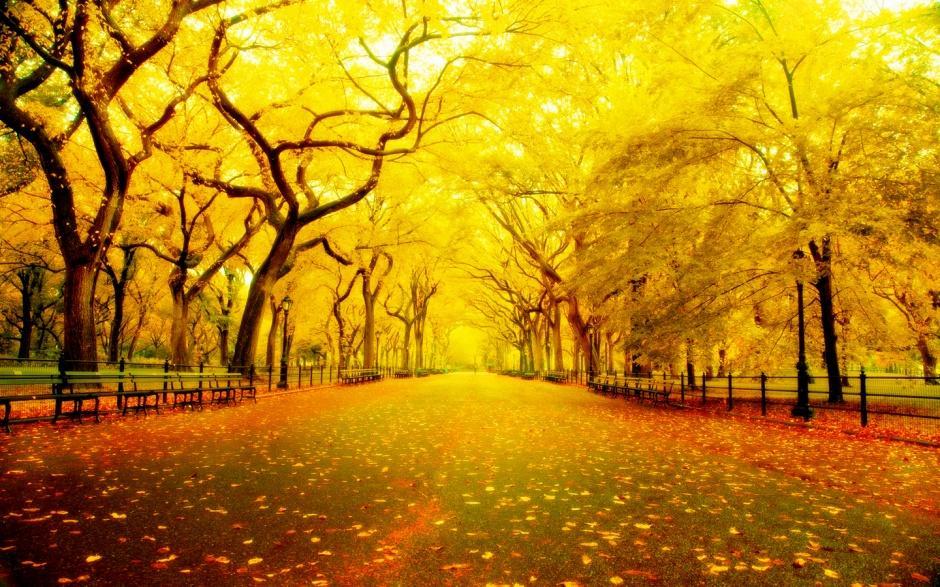 金黄色美丽的秋天风景图片
