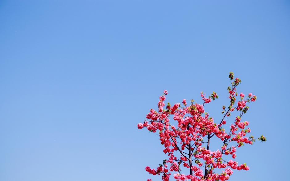 唯美花海春天的美景风景图电脑高清壁纸_图片新闻