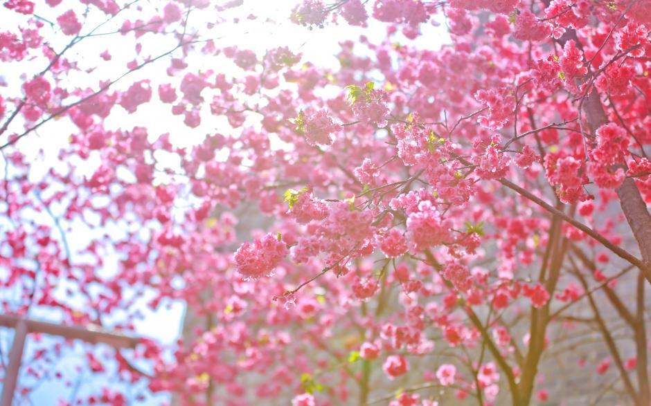 唯美花海春天的美景风景图电脑高清壁纸