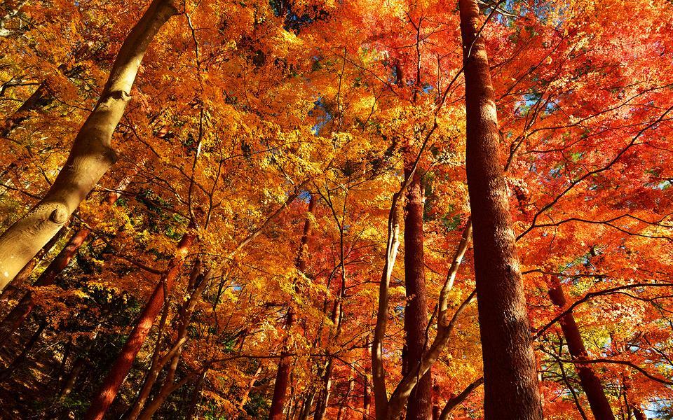 森林景色唯美风景壁纸