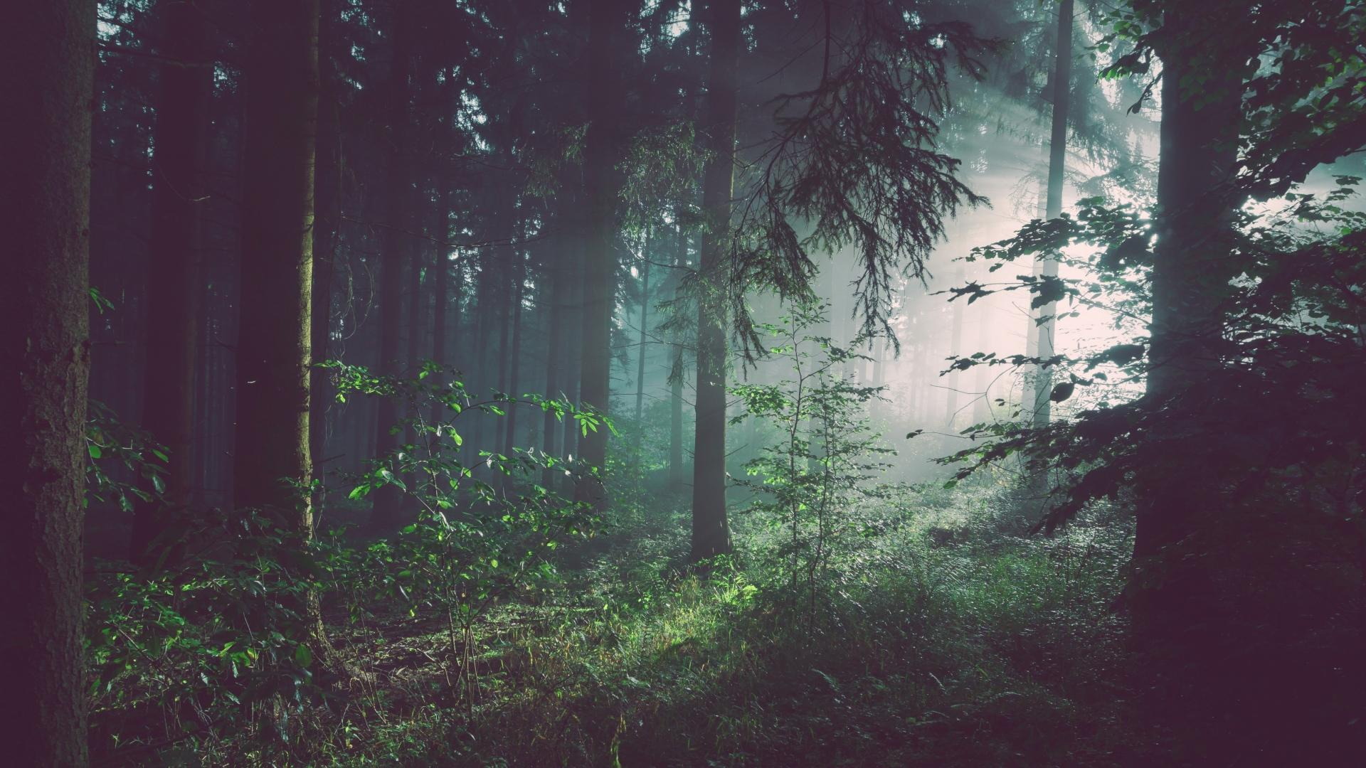 雾下朦胧的风景图片高清桌面壁纸_图片新闻_东方头条