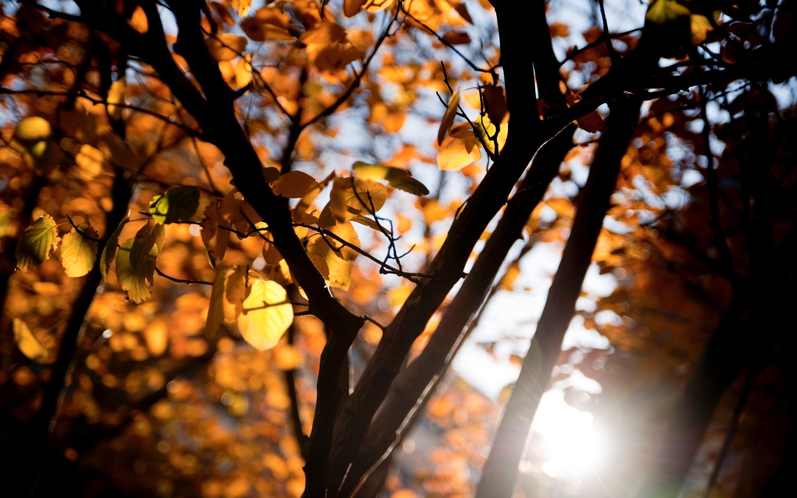 唯美好看的秋天风景桌面壁纸
