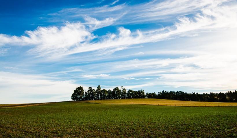 秋天季节下的麦田风景图片