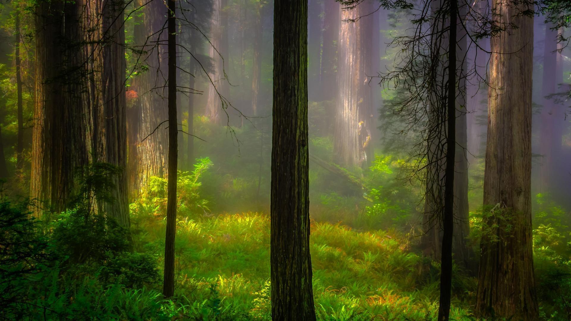 意境唯美的风景摄影图片高清宽屏壁纸