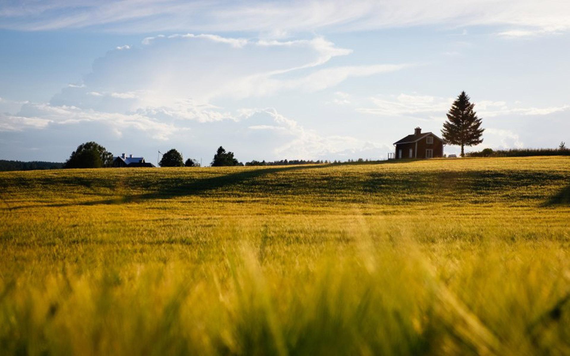 一望无际的大草原唯美风景图片桌面壁纸