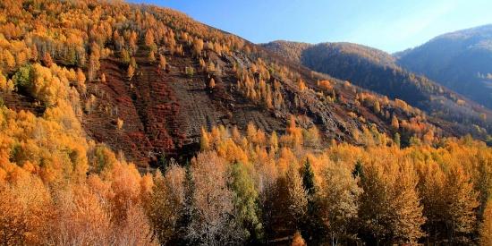 新疆阿勒泰之秋 是一场震撼视觉的大片