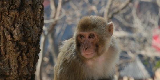 花果山猴子神态