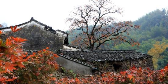 柿林村采风照片