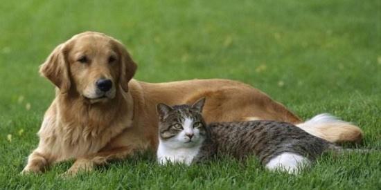 猫和狗究竟谁的智商更高?科学家表示:喵星人不配合人类智商测试