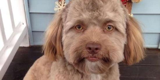这只狗狗长得也太像人类了吧