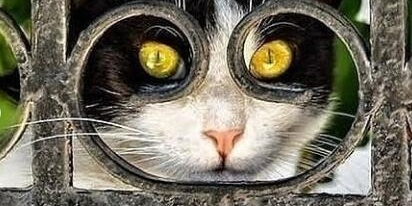 这样的猫主子你见过吗?
