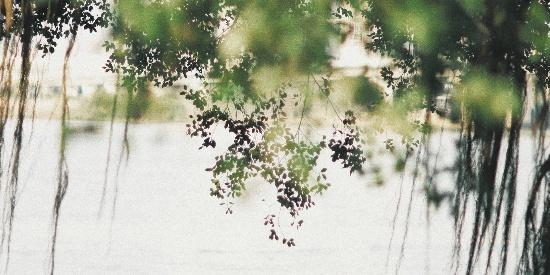 春天自然风景图片桌面壁纸