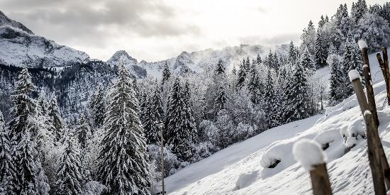 唯美森林雪景图片电脑壁纸