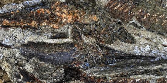 美国北达科他州发现6600万年前鱼类化石