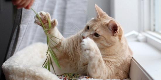 网红大胖橘患趾畸形 有像人类一样的小手手