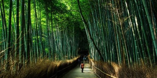 郁郁葱葱的竹林自然风景摄影图片大全