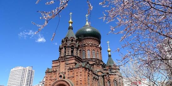 哈尔滨索菲亚教堂外桃花绽放美如画