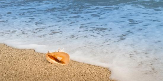 沙滩上的海螺唯美高清桌面壁纸