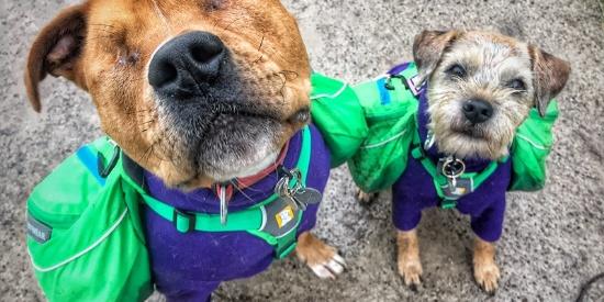 英国先天性失明狗狗获导盲犬朋友暖心守护