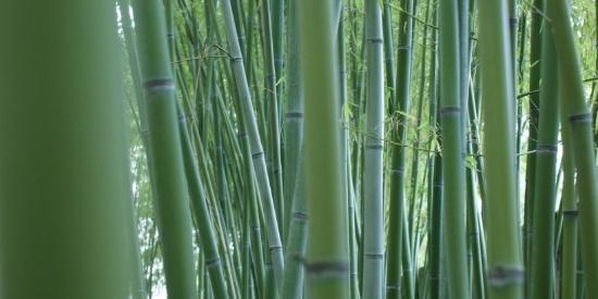 翠绿的竹林图片