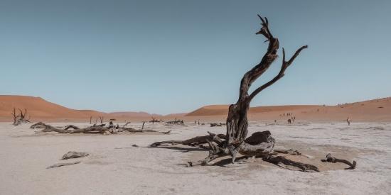 无边的沙漠图片