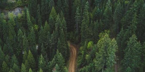 生长茂盛的森林图片