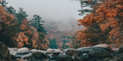 唯美的秋季树林风景图片