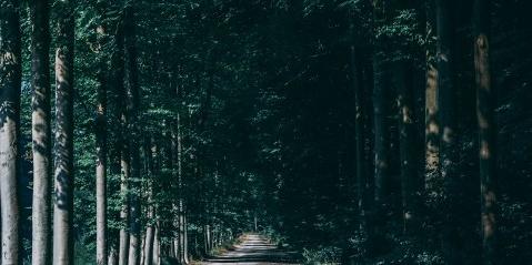 幽静的林间小路图片
