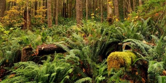 树木茂密的雨林图片
