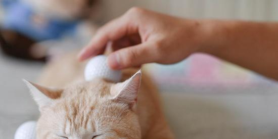 专家称撸猫有助于缓解老年痴呆 朋友,你有猫了吗