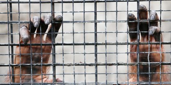 眼里满满的绝望!曼谷商场里的动物园被指控非人道