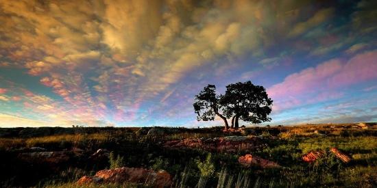 壁纸欣赏:大自然中的一棵树